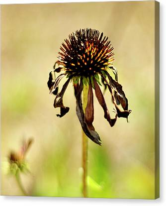 'stand Strong' Canvas Print