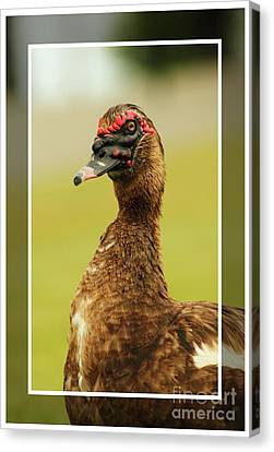 Canvas Print featuring the photograph Standin Proud by Lori Mellen-Pagliaro