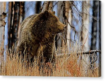 Canvas Print featuring the photograph Standing In The Grass by J L Woody Wooden