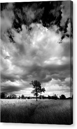 Canvas Print featuring the painting Standing Out Alone by John Chivers