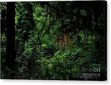Stanley Park Trees 3 Canvas Print by Terry Elniski