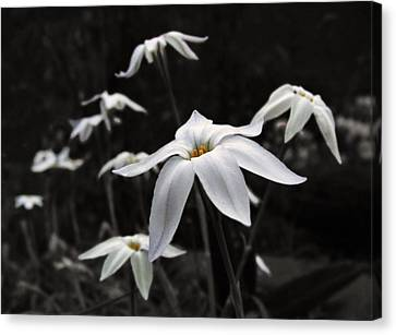 Canvas Print featuring the photograph Star Flowers by Deborah Smith