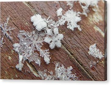 Canvas Print featuring the photograph Star Shaped Snow Flakes by Chad and Stacey Hall