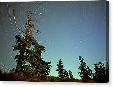 Star Trails, North Star And Old Douglas Canvas Print by David Nunuk