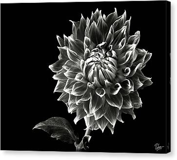 Canvas Print featuring the photograph Starburst Dahlia In Black And White by Endre Balogh