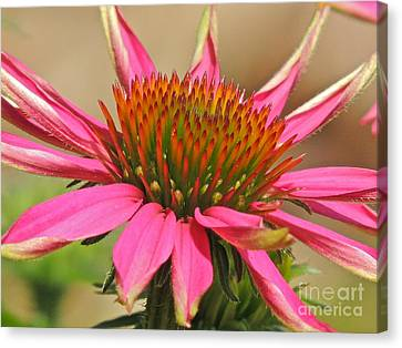 Canvas Print featuring the photograph Starburst by Eve Spring