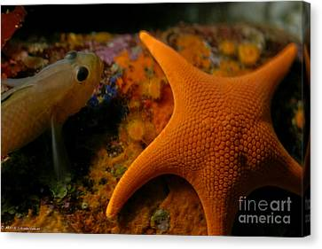Starfish And Friend Canvas Print by Mitch Shindelbower
