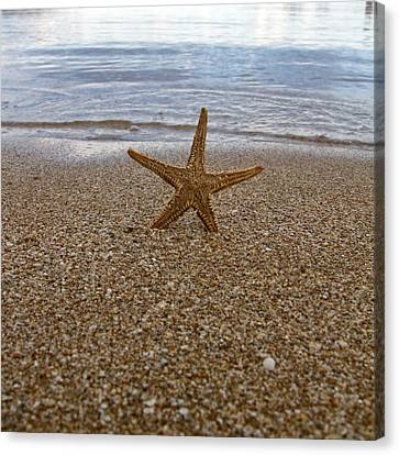 Starfish Canvas Print by Stelios Kleanthous