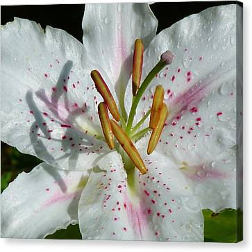 Canvas Print featuring the photograph Stargazer Lily by Lynn Bolt