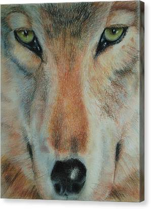 Staring Contest Canvas Print by Joanna Gates