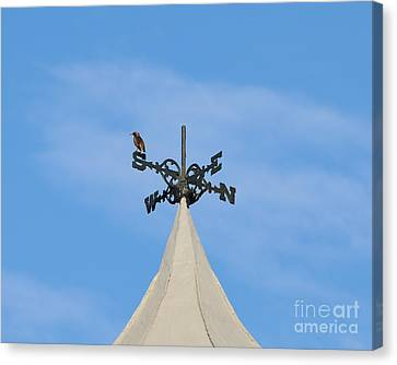 Staring Southward Canvas Print by Al Powell Photography USA