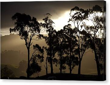 Stark Canvas Print by Lee Stickels