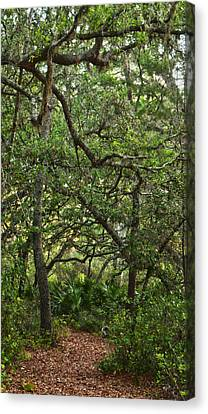 Starkey Woodlands  Canvas Print by Gregory Colvin