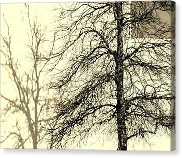 Steiglich Steichen And Pratt Canvas Print by Joe Jake Pratt
