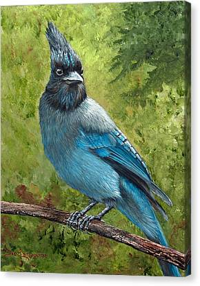 Stellar Jay Canvas Print by Dee Carpenter