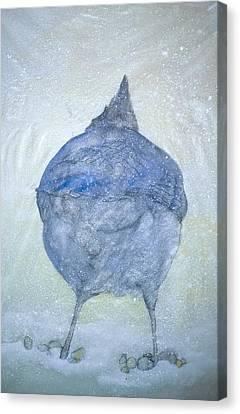 Stellar Jay From  Back Canvas Print by Debbi Saccomanno Chan