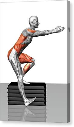 Human Body Part Canvas Print - Step-down Exercises by MedicalRF.com