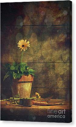 Still Life Of Yellow Gerbera Daisy In Clay Pot Canvas Print by Sandra Cunningham