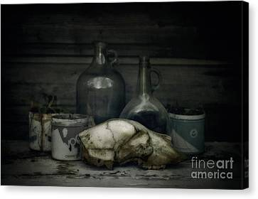 Still Life With Bear Skull Canvas Print by Priska Wettstein