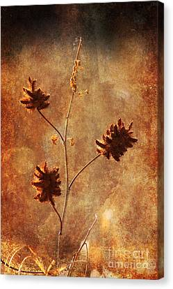 Still Standing Canvas Print by Alyce Taylor