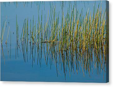 Still Water And Grasses Canvas Print by Rich Franco