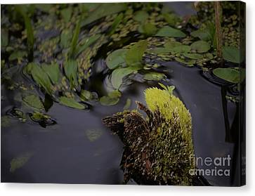 Stirring The Swamp Pot Canvas Print by The Stone Age