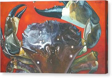 Canvas Print - Stone Crab  by Jon Ferrentino