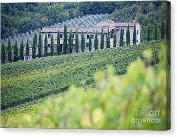 Stone Farmhouse And Vineyard Canvas Print by Jeremy Woodhouse