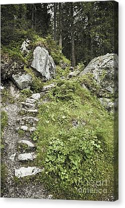 Stone Steps On Forest Path Canvas Print by Jon Boyes