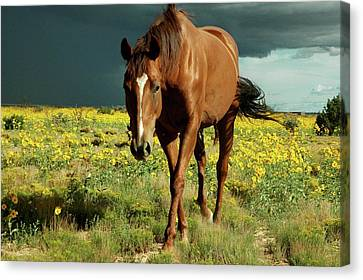 Storm Horse Canvas Print by photo © Jennifer Esperanza