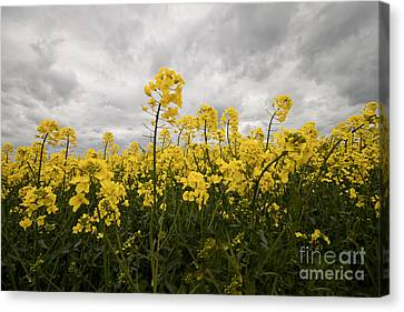 Storm In Sight Canvas Print by Christine Amstutz