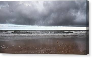 Storm Watch Canvas Print by Betsy Knapp