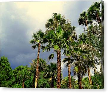 Stormy Skies And Palms Canvas Print by Sheri McLeroy