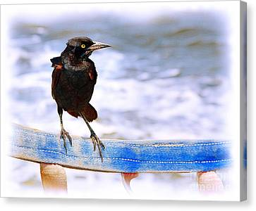 Stowaway On The Ferry Canvas Print by Judi Bagwell