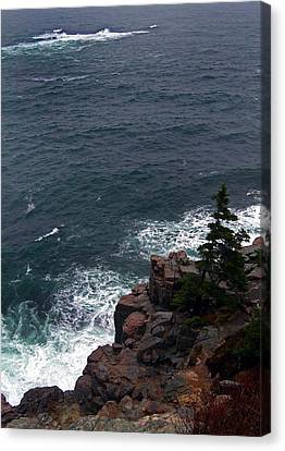 Straight Down Canvas Print by Skip Willits