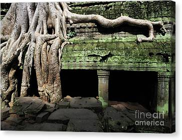 Strangler Fig Tree Roots On Temple Canvas Print
