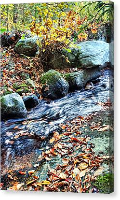 Stream In The Woods Canvas Print by HD Connelly