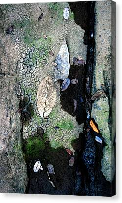 Streambed Leaves 1 Canvas Print