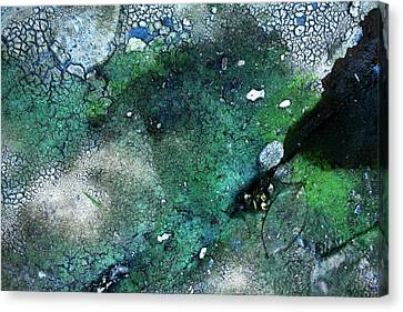 Streambed Leaves 2 Canvas Print by Jennifer Bright