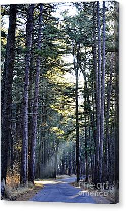 Streaming Dawn Canvas Print by Whispering Feather Gallery