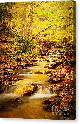 Streams Of Gold Canvas Print by Darren Fisher