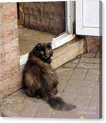 Street Cat Canvas Print by Yury Bashkin
