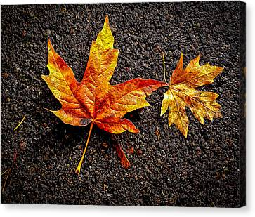 Canvas Print featuring the photograph Street Leaf by Ken Stanback
