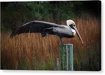 Stretch It Out Canvas Print by Paulette Thomas