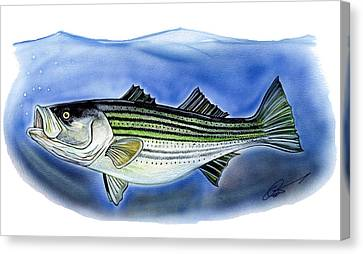 Striped Bass Canvas Print by Dave Olsen
