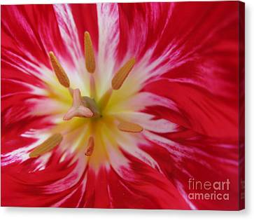 Striped Flaming Tulips. Hot Pink Rio Carnival Canvas Print by Ausra Huntington nee Paulauskaite