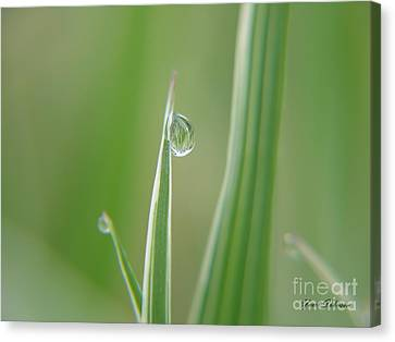 Canvas Print featuring the photograph Striped Raindrops by Yumi Johnson