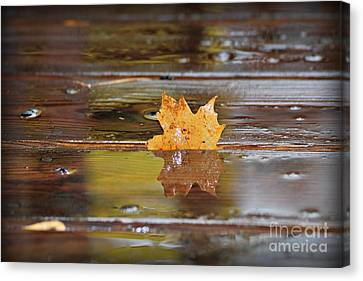 Stuck Maple Leaf Canvas Print by Lila Fisher-Wenzel