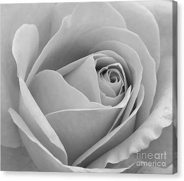 Canvas Print featuring the photograph Study In Black And White by Cindy Manero