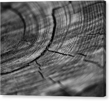 Stump Canvas Print by Marlo Horne